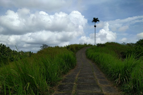Bali-Ubud-Campuhan-Ridge-walk-CR-Billie-Cohen