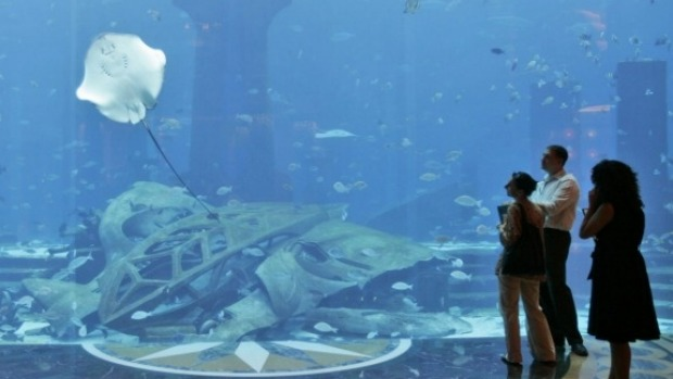 The marine habitat at the Atlantis is stocked with thousands of marine animals